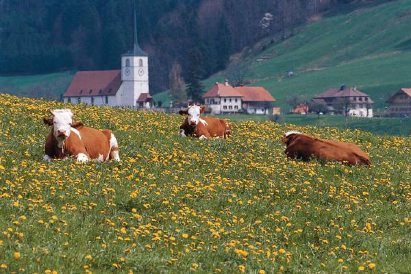 langzeit-urlaub.eu - günstig Urlaub und Reisen buchen
