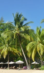 Insel mit Palmenstrand