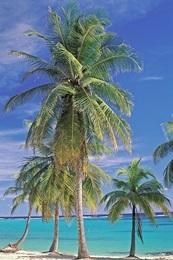 Südsee-Urlaub in Neukaledonien