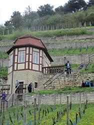 Jungweinwochen in Freyburg