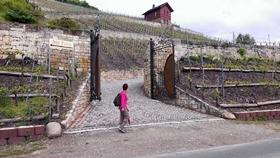 Reisen zum Wein - Jungweinwochen und Weinfruehling in Freyburg