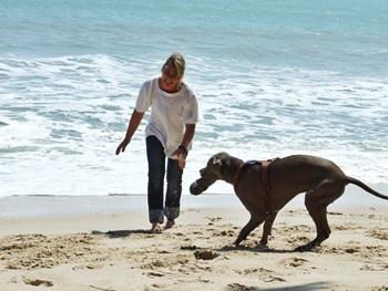 Urlaub in Zeeland mit Hund